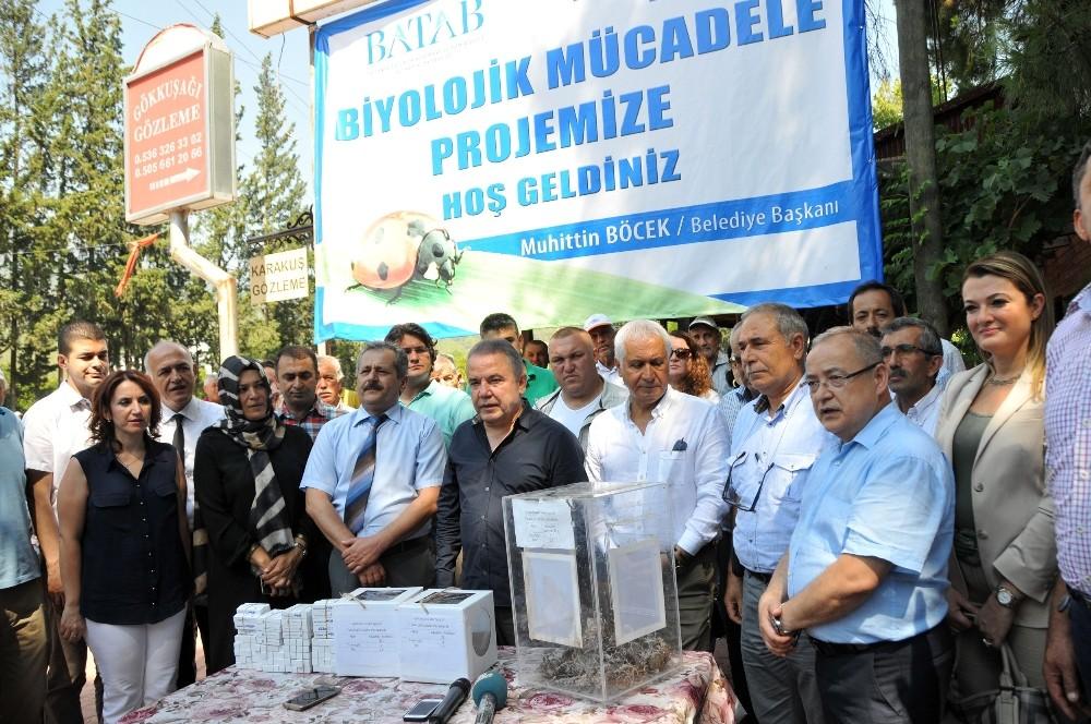 Antalya zararlı böceklerle mücadele ediyor