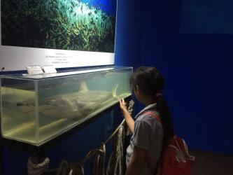 Aslan ve papağan balıkları Deniz Biyolojisi Müzesi'nde