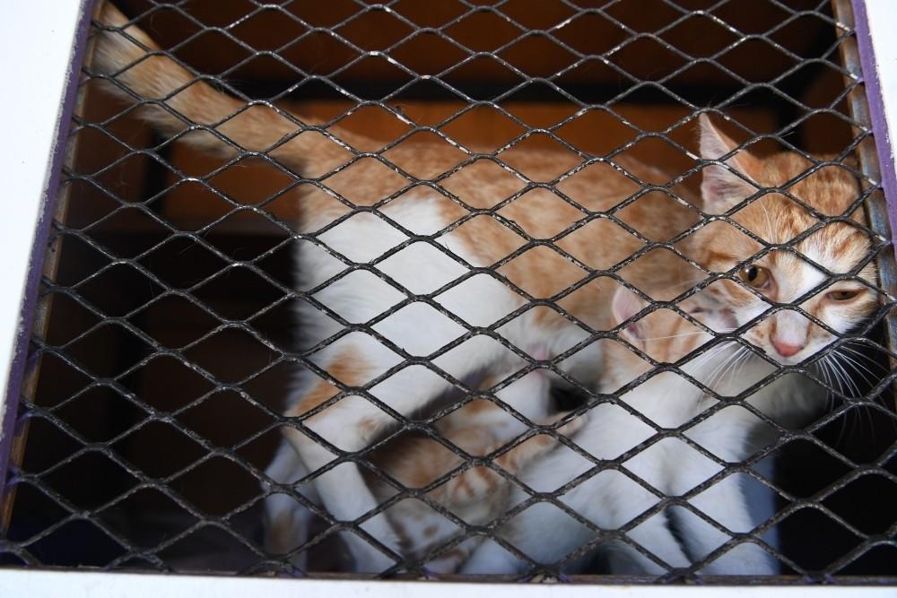 Konyaaltı'nda sokak hayvanları için vantilatör