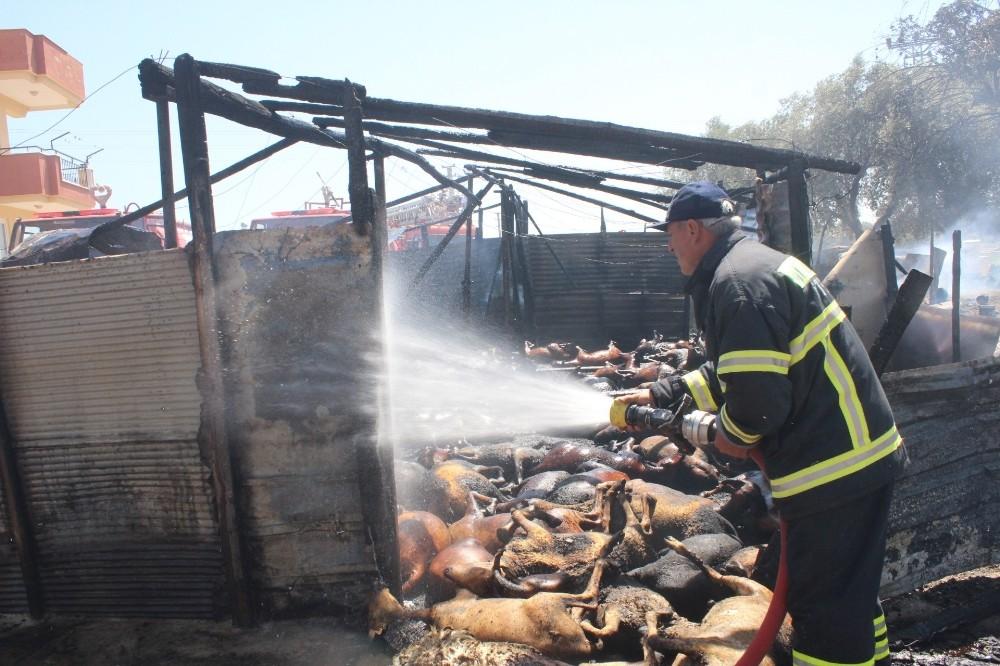 Manavgat'ta çıkan yangında 550'e yakın hayvan telef oldu