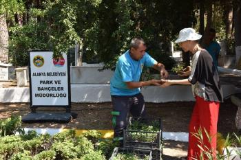 Alanya Belediyesi mezarlıklarda 44 bin 220 adet ücretsiz çiçek dağıtacak