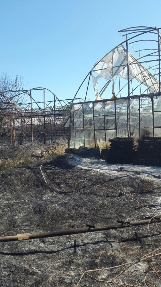 Antalya'da çıkan yangında 7 sera zarar gördü