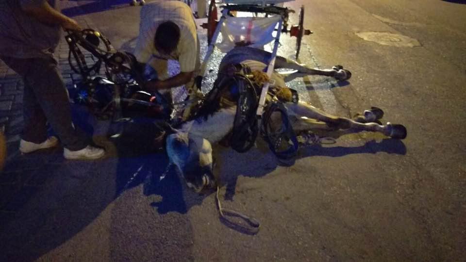 Antalya'da faytona koşulan atın ölümü