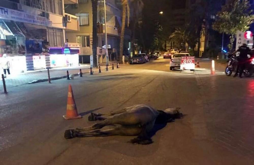 Antalya'da insanlık dışı görüntü