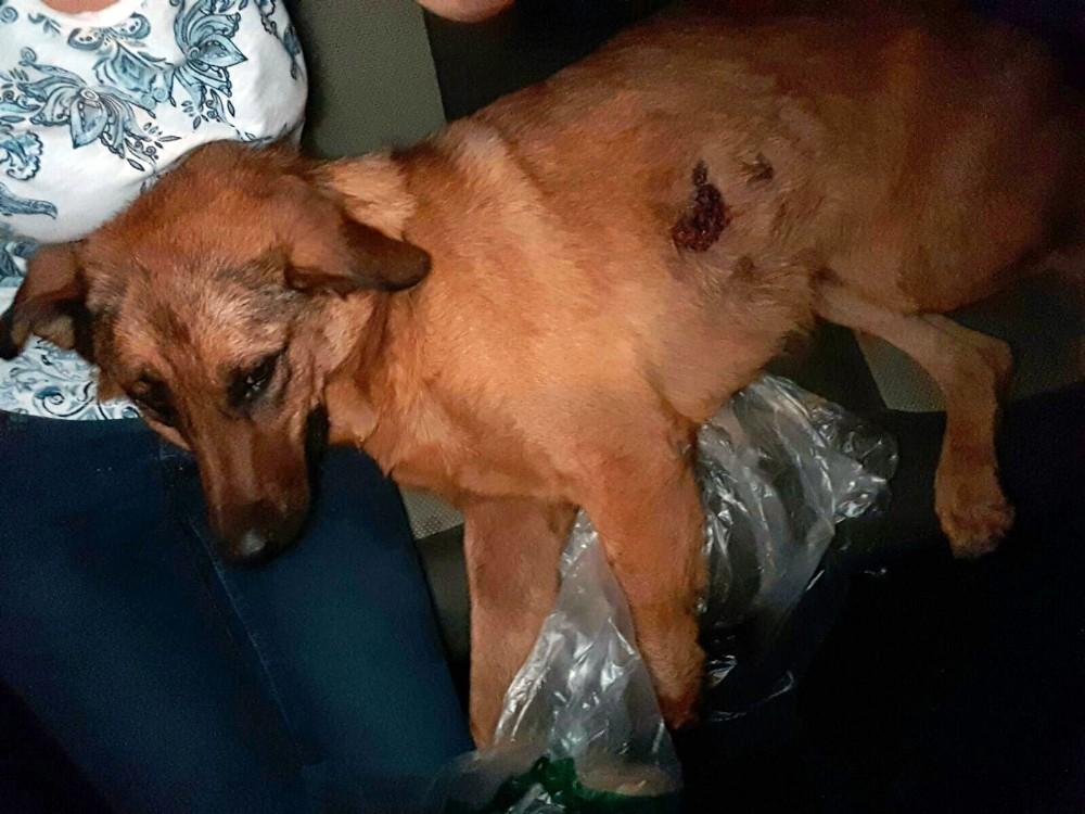 Antalya'da sokak köpeğine kurşun yağmuru