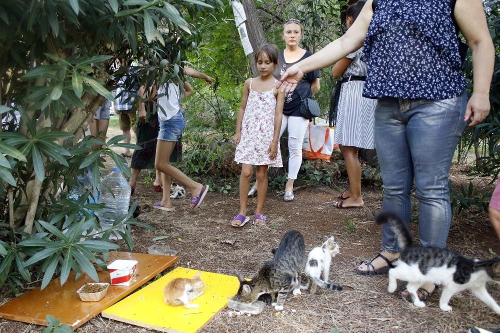 Antalya'daki 'kedi katliamına' site sakinlerinden tepki