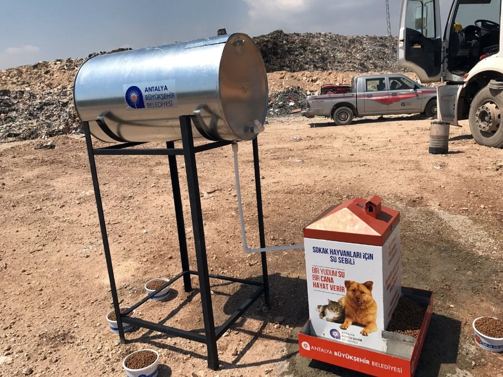 Sokak hayvanları için özel beslenme sistemi