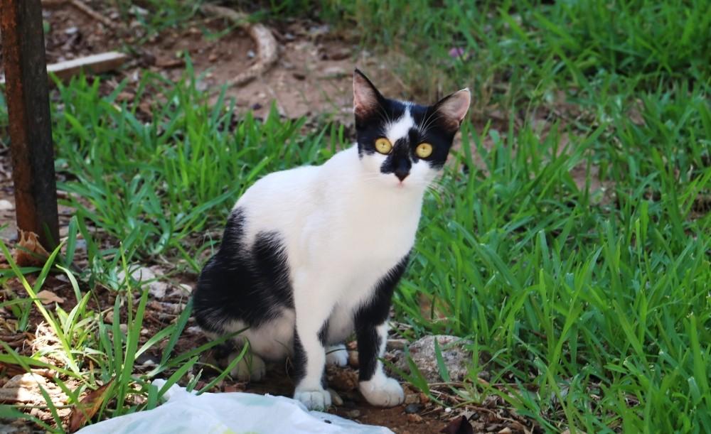 Kısırlaştırılmış Kediler için Özel Bir Lezzet mi Arıyorsunuz?