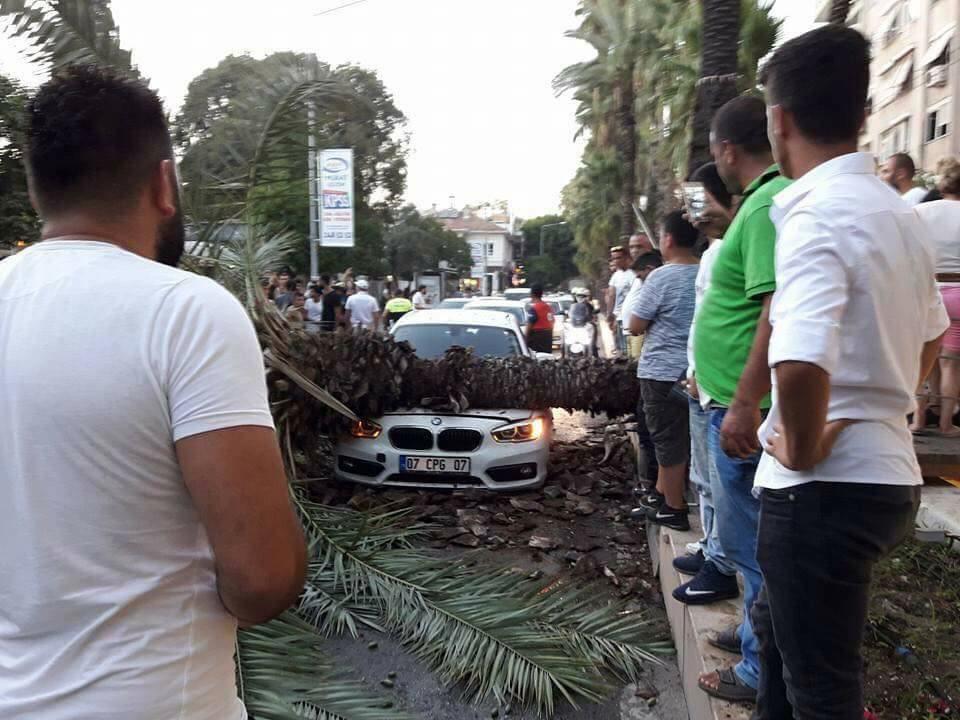 Sosyal medyadan 'devrilecek' diye uyardığı ağaç aracın üstüne düştü