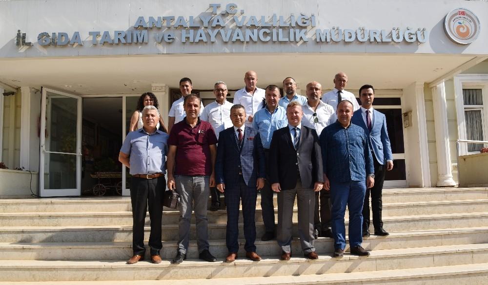 Antalya tıbbi aromatik bitkilerde söz sahibi olmak istiyor