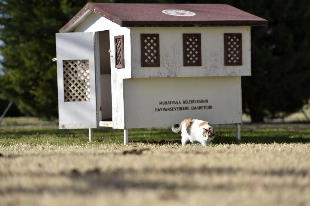 Antalya'da kedilere temalı kedi evi