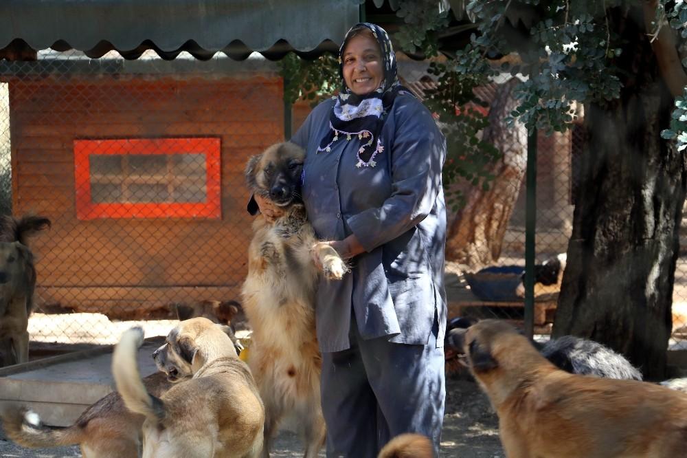 Engelli sokak köpeklerine özel bakım