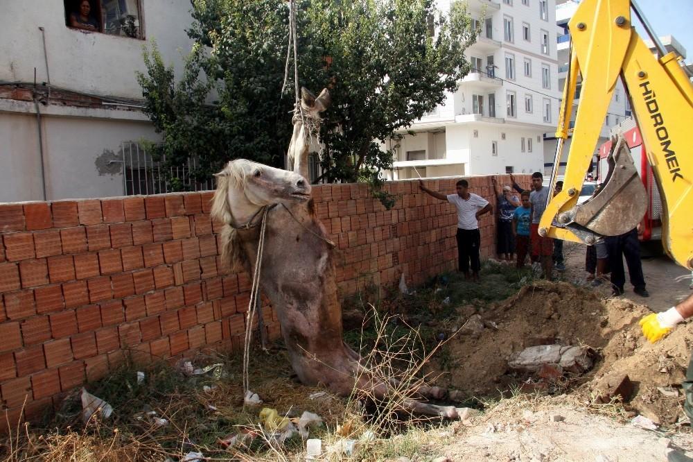 Foseptik çukuruna düşen at kurtarıldı