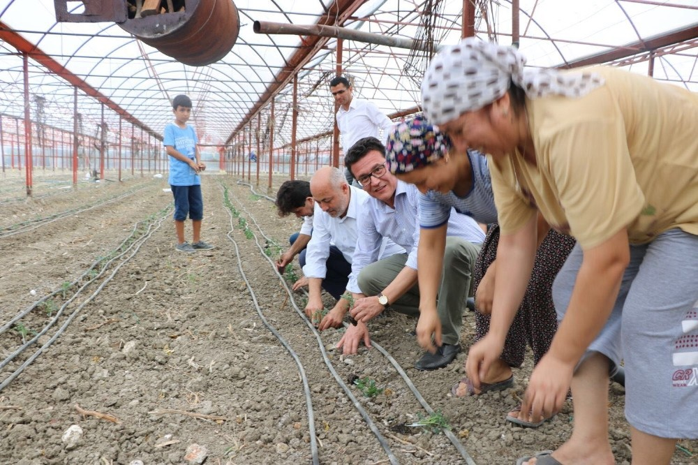 Milletvekili Uslu, domates fidelerini toprakla buluşturdu