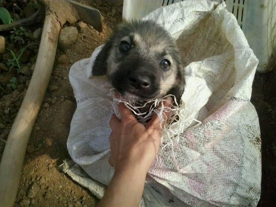 Ölüme terk edilen yavru köpeği Alman aile kurtarmış