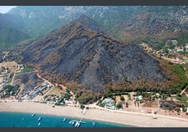 Yangınla kararan Adrasan , 1 yıl içinde 250 bin yeni fidanla yeşile büründü