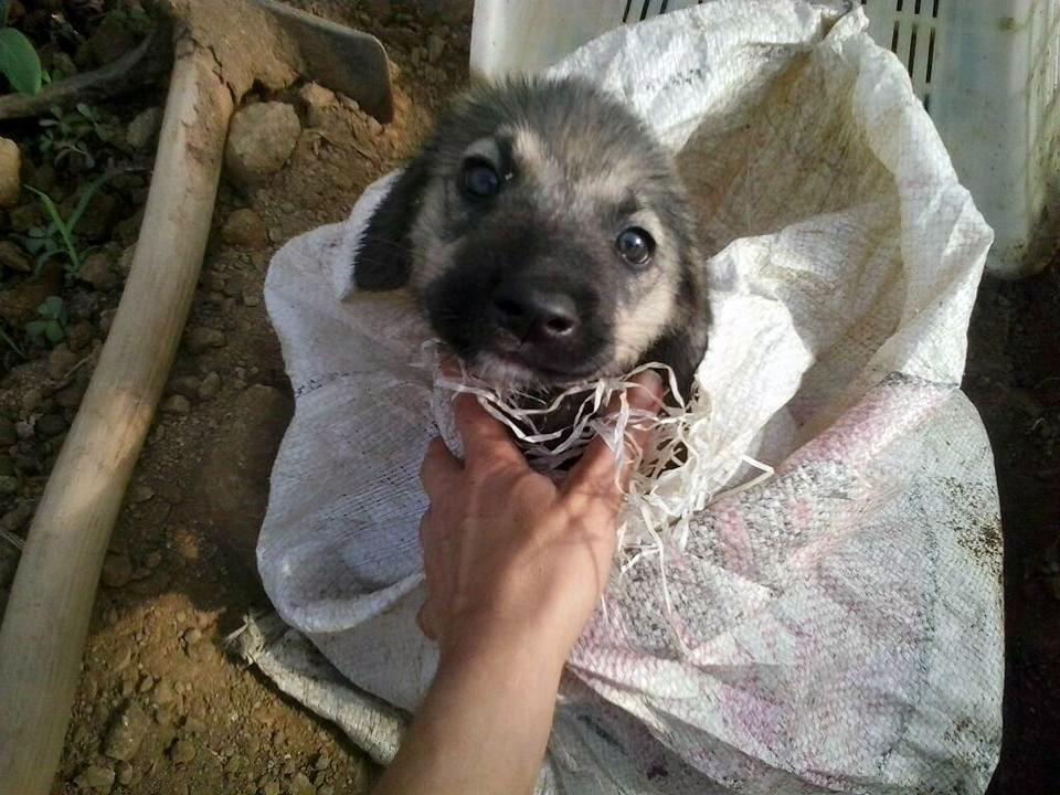 Yavru köpeği çuvala koyup ölüme terk ettiler