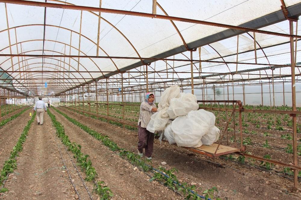 Kumluca'da hortum seraları yerle bir etti