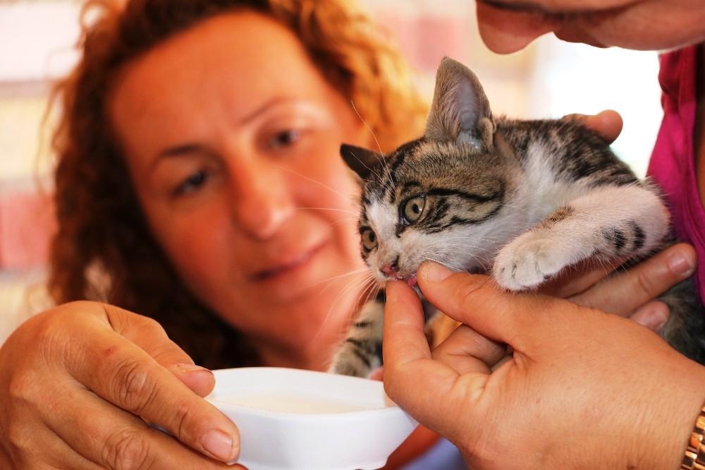Cep telefonundaki kedi sesi sayesinde kurtarıldı