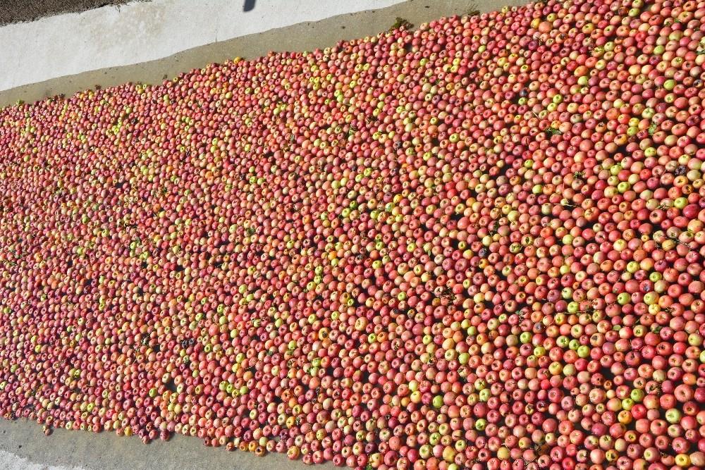 Meyve suyu farikası ankon elma alımına başladı
