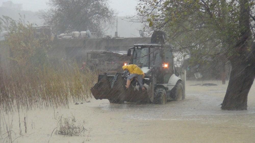 Manavgat yağmura teslim oldu, 15 günlük buzağı iş makinesiyle kurtarıldı