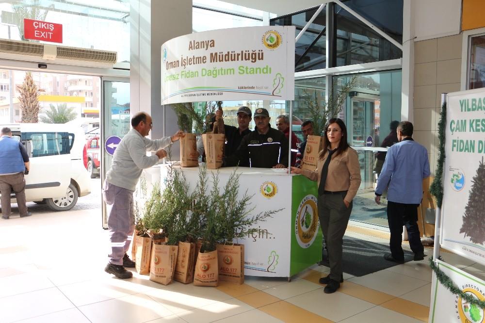 Alanya'da 2 bin adet ücretsiz çam fidanı dağıtıldı