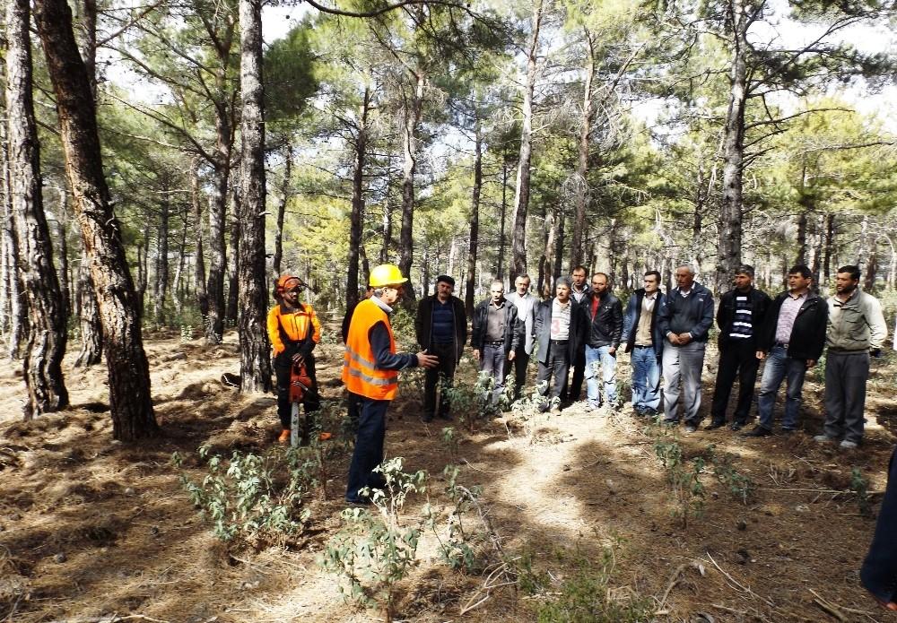 Antalya'da Ağaç Kesme ve Boylama Operatörlüğü kursu