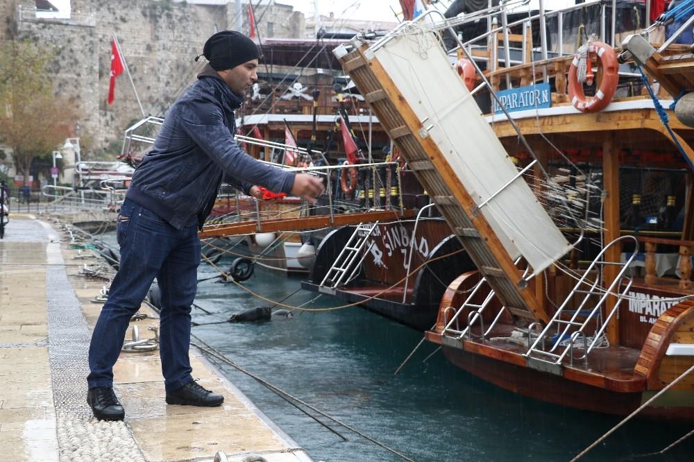 Yat limanını mesken tutan Akdeniz foku, balıkçıların maskotu oldu