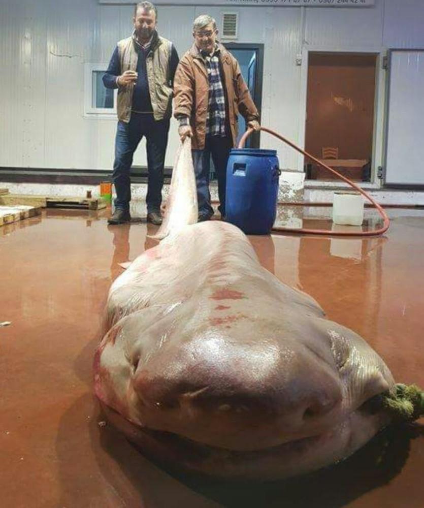 Antalya'da balıkçıların ağına canavar takıldı