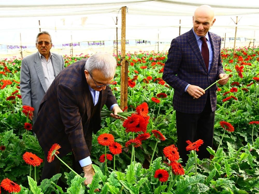 Antalya'da çiçek mezatı
