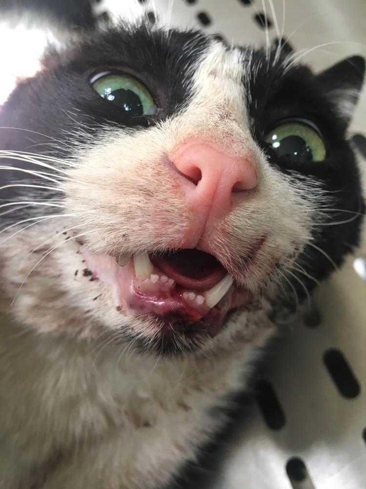 Konyaaltı Belediyesi'nden kediye şefkat eli