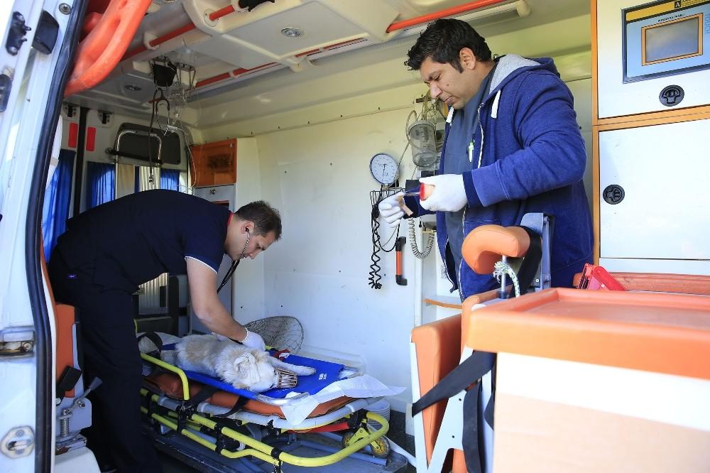 Büyükşehir Belediyesi Hayvan ambulansı 7/24 hizmette