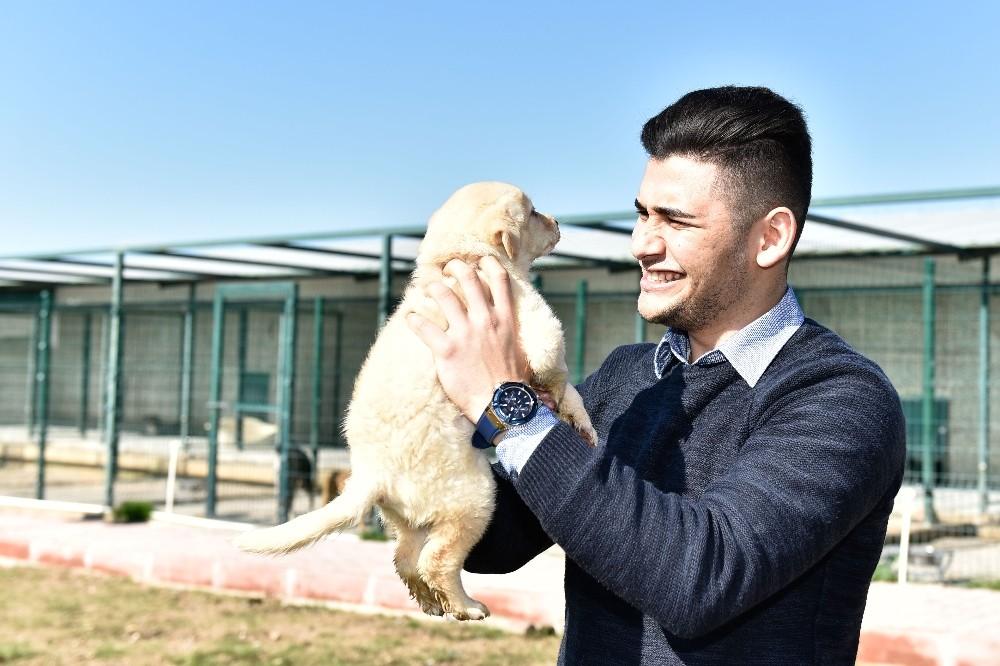 Muratpaşa'da 541 kedi ve köpek sahiplendirildi