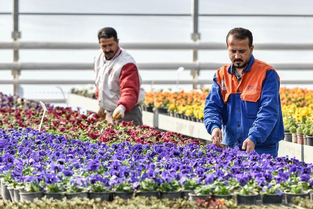 2 milyon çiçek Muratpaşa parklarını renklendirecek.
