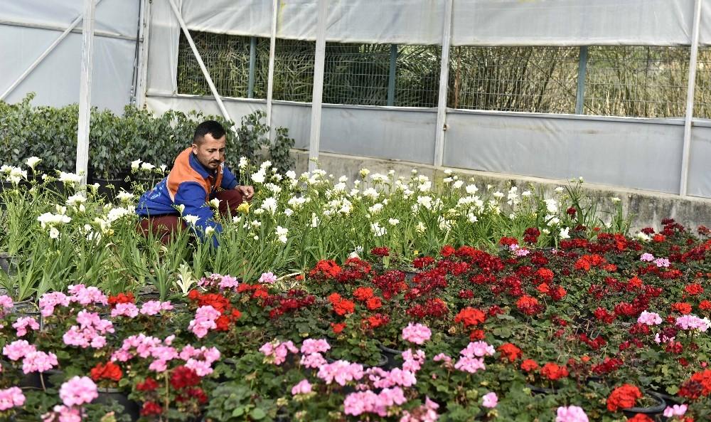 21 bin 765 bitki ve çiçek gün sayıyor