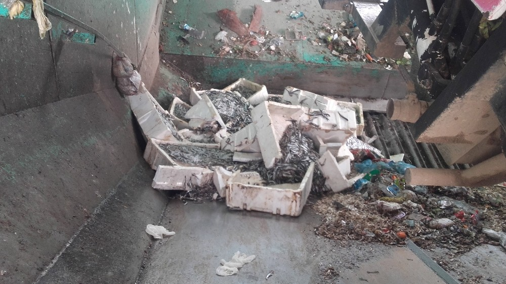 Alanya'da 400 kilo bozuk balık ele geçirildi