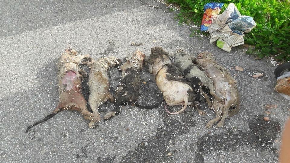 Alanya'da hayvan katliamı