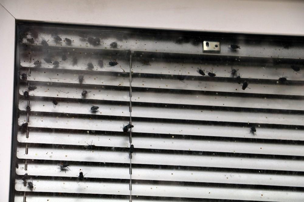 Antalya polisinin sinek alarmı