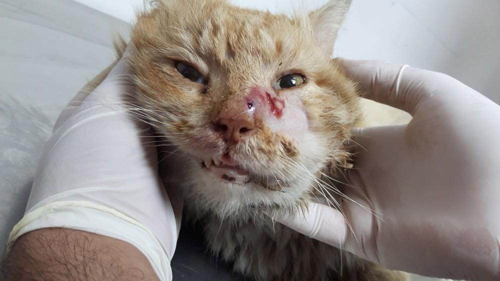 Antalya'da yaralı kediye yardım eli