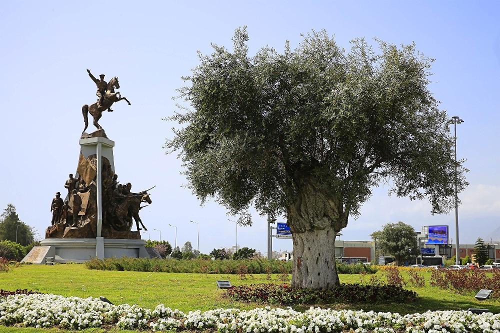 Antalya'nın kavşaklarına barışın simgesi zeytin ağacı