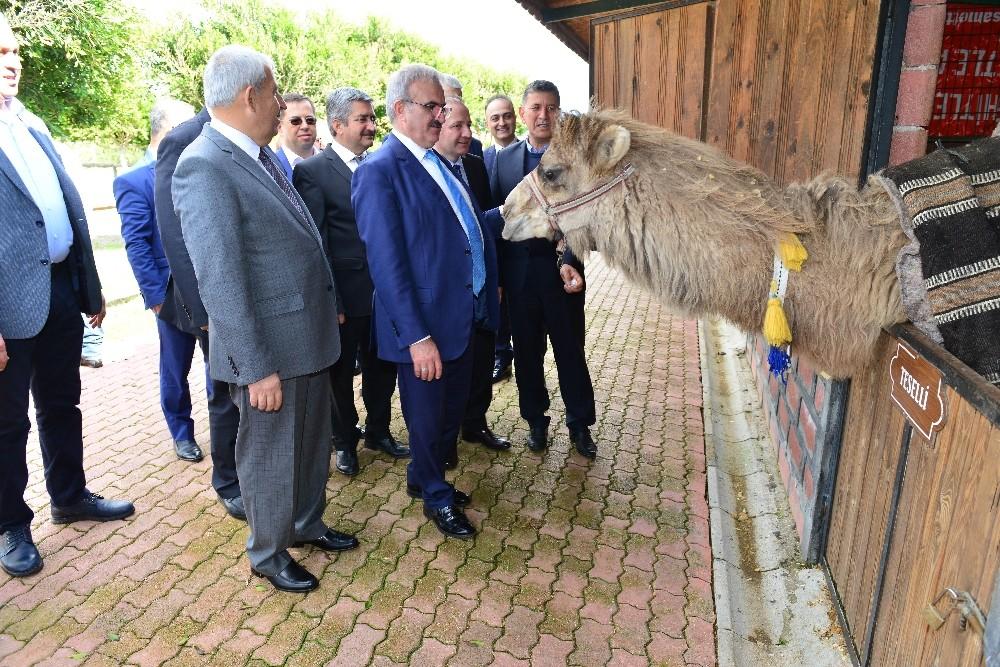 Karaloğlu devesine özel havut yaptırılacak