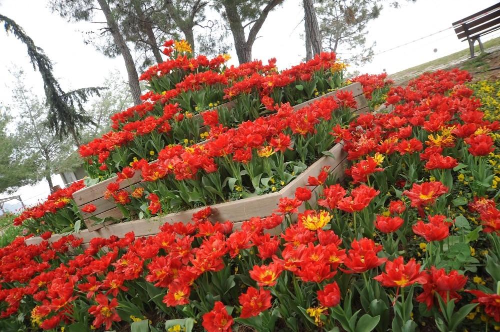 Kepez'de park ve bahçeler laleler ile donatıldı