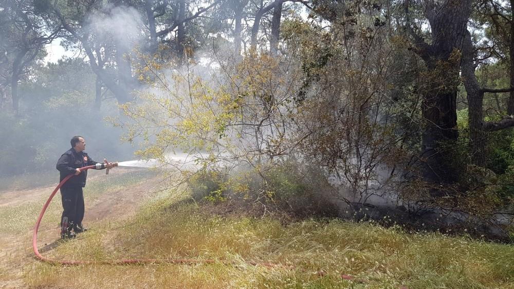 Orman yangını ucuz atlatıldı