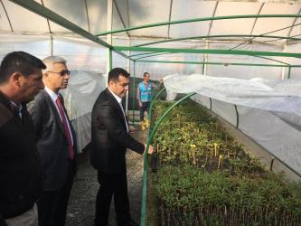 Alanya Belediyesi bitki ve çiçek üretiminden 2,5 milyon TL tasarruf sağladı