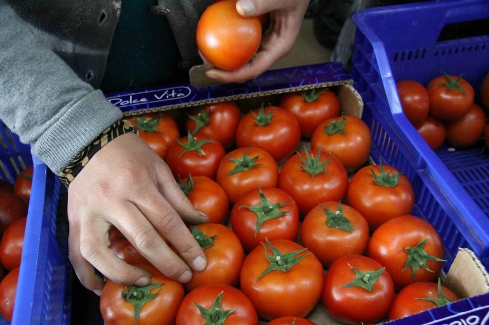 Antalya'da ihracatçıda buruk domates sevinci