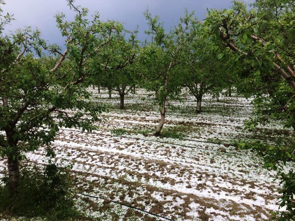 Antalya'da meyve üreticisini dolu ikinci kez vurdu