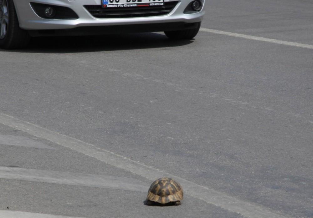 Antalya'da sürücünün kaplumbağa duyarlılığı