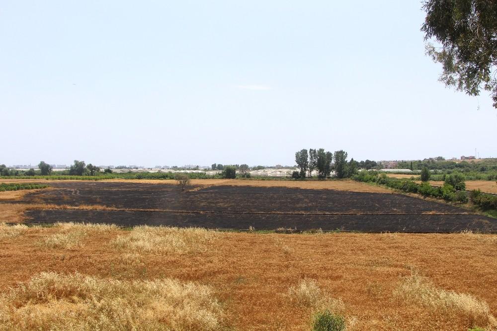 Antalyalı çiftçinin erken buğday hasadı sevinci hüsrana döndü