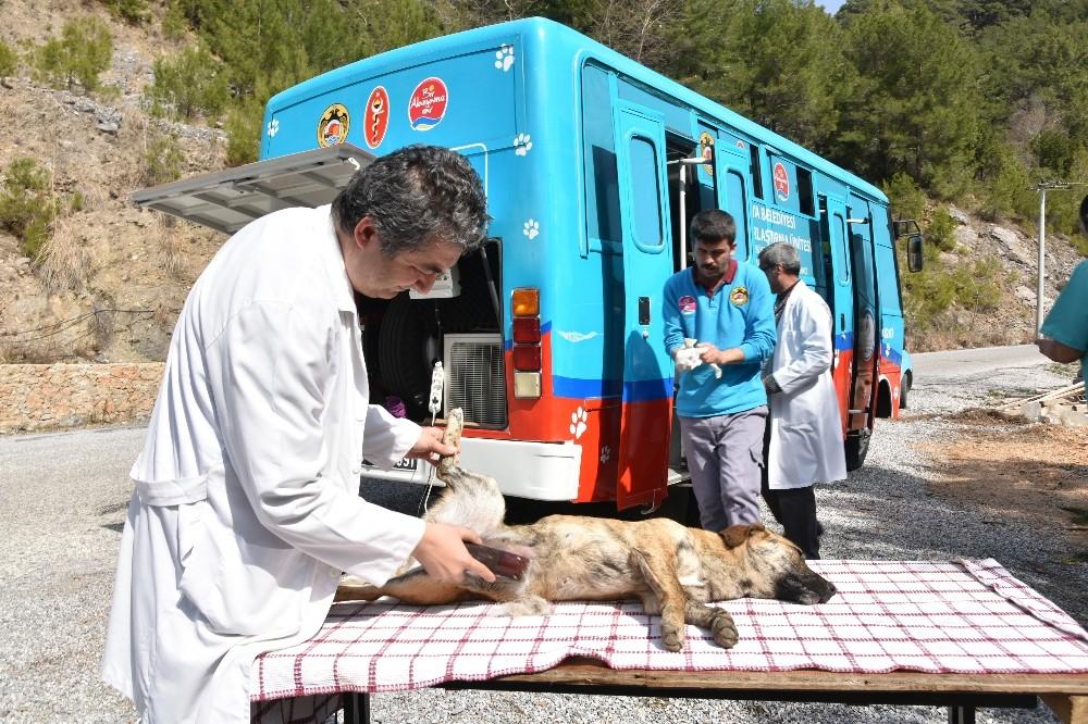 Mobil kısırlaştırma aracı kırsalın hizmetinde