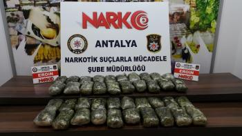 Antalya'da durdurulan tırda 1 milyon liralık uyuşturucu çıktı